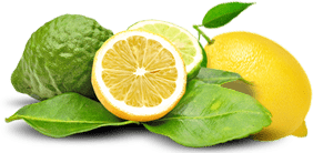 catalog/intercibus/slider/175cal1/bergamot.png